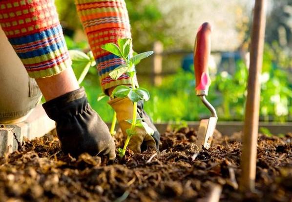 Подготовка огорода к обработке