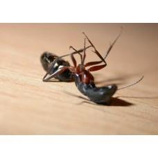 Как убрать насекомых с участка - лучшие средства