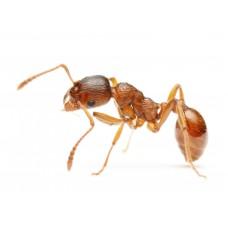 Как самостоятельно избавиться от насекомых?