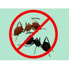 ТОП-4 эффективных средств против муравьёв