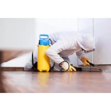 Основные советы как правильно обрабатывать помещения против насекомых